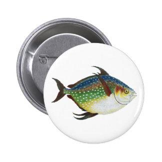 Vintage Tropical Opah Fish, Marine Aquatic Animal Pinback Button
