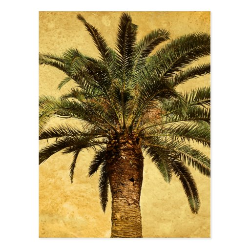 Vintage Tropical Palm Tree Postcards