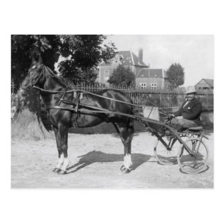 Vintage trotter and sulky postcard