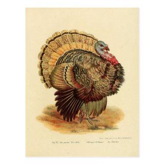 Vintage turkey illustration birds collection postcard