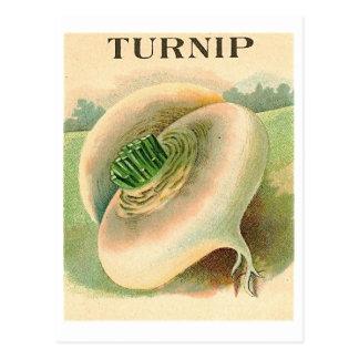 vintage turnip seed packet postcard
