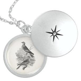 Turtle Dove Jewelry Zazzle