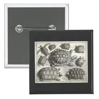 Vintage Turtle Etching Buttons