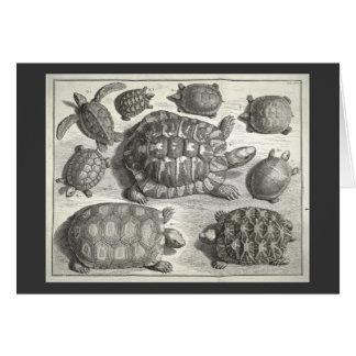 Vintage Turtle Etching Greeting Card