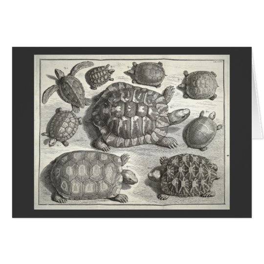 Vintage Turtle Etching Card