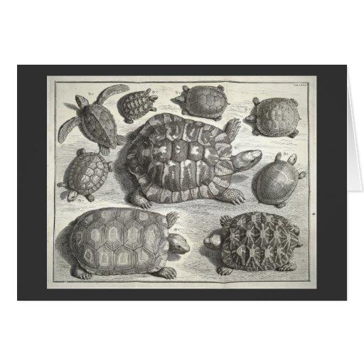 Vintage Turtle Etching Greeting Cards