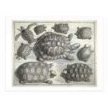 Vintage Turtle Etching Post Cards