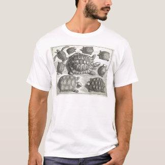 Vintage Turtle Etching T-Shirt