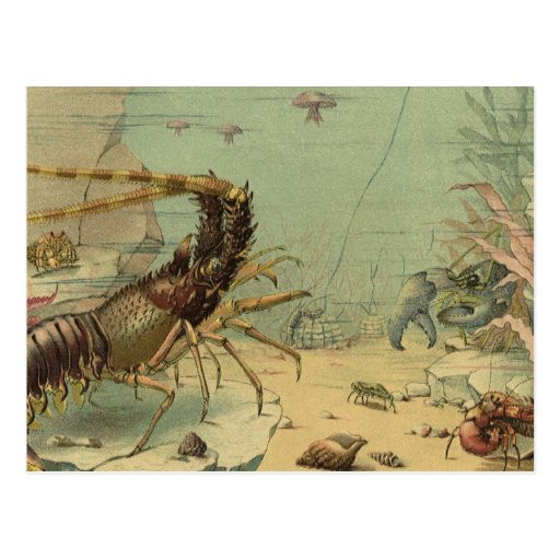 Vintage Underwater Ocean Scene with Sea Life Post Cards
