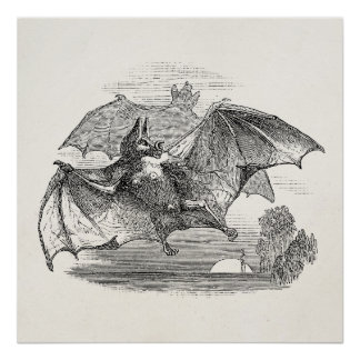 Vintage Vampire Bats Personalized Retro Bats Poster
