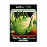 Vintage Vegetable Kohl Rabi Seed Package Postcard
