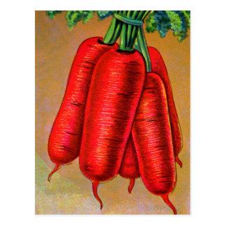 Vintage Vegetables Carrot Orange Carrots Postcard