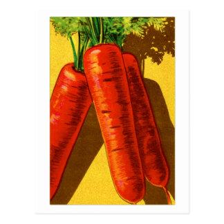 Vintage Vegetables Heirloom Orange Carrots French Postcard