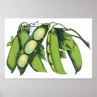 Vintage Vegetables; Lima Beans, Organic Farm Foods Poster