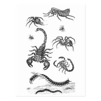 Vintage Vermin Scorpion Spider Flea Illustration Postcard