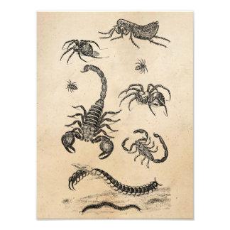 Vintage Vermin Scorpion Spider Flea Pink Art Photo