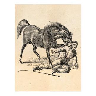 Vintage Vicious Biting Horse Template Postcard