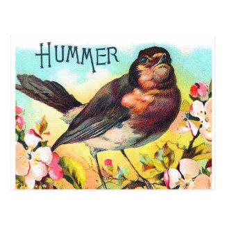 Vintage Victorian Hummer Bird Illustration Postcard