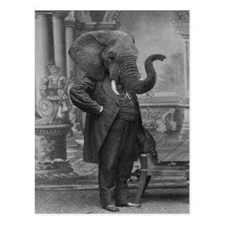 Vintage Victorian Man in Suit with Elephant Head Postcard