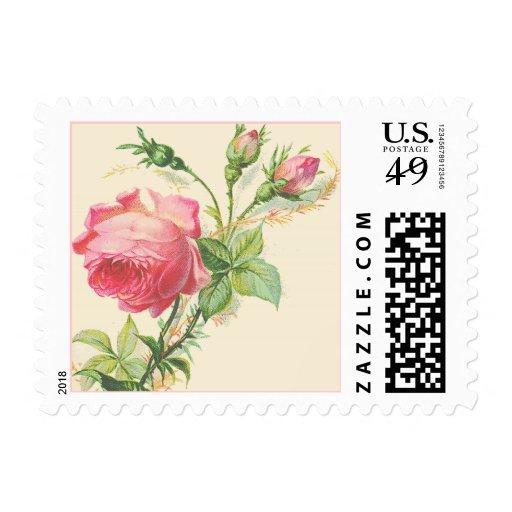 Vintage Victorian Pink Rose Art Postage