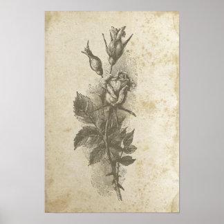 Vintage Victorian Roses Distressed Rose Floral Poster