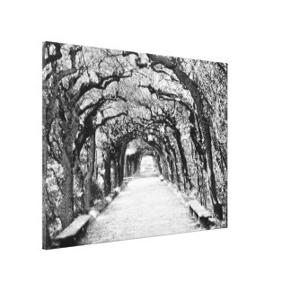 Vintage Villas & Gardens: Ilex-walk Canvas Print