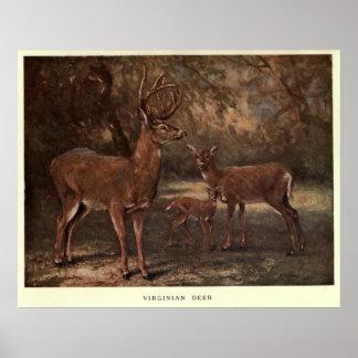 Vintage Virginia Deer Painting (1909) Poster