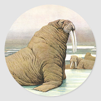Vintage Walrus on Iceberg in Arctic, Wild Animals Classic Round Sticker