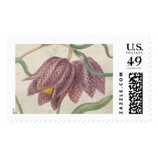 Vintage Watercolor Checkered Lily Flower Postage