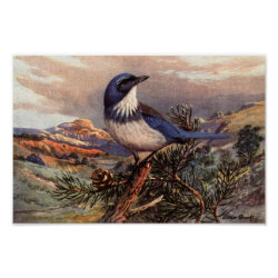 Matte Poster with Brooks' Western Scrub-jay design