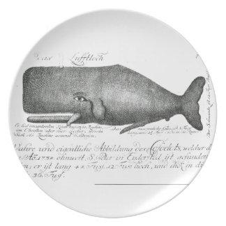 Vintage Whale Design Dinner Plate