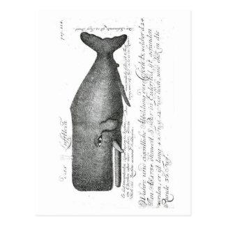 Vintage Whale Design Postcard
