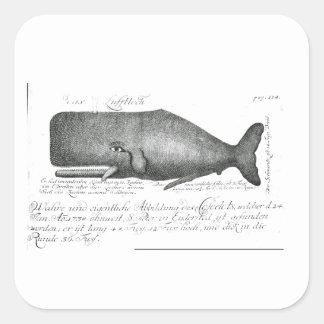 Vintage Whale Design Square Sticker