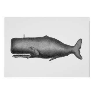 Vintage Whale Poster