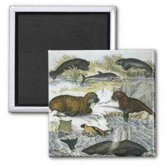Vintage Whales, Seals and Walruses, Marine Animals 2 Inch Square Magnet