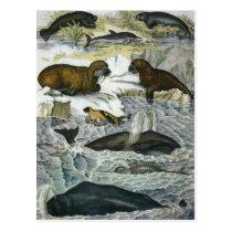 Vintage Whales, Seals and Walruses, Marine Animals Postcard