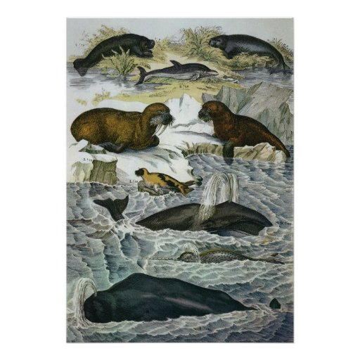 Vintage Whales, Seals and Walruses, Marine Animals Poster