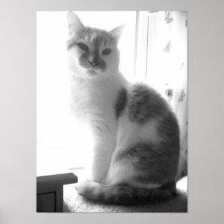 Vintage White Cat Print