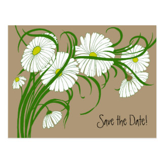 Vintage White Gerber Daisy Flowers Save the Date Postcards
