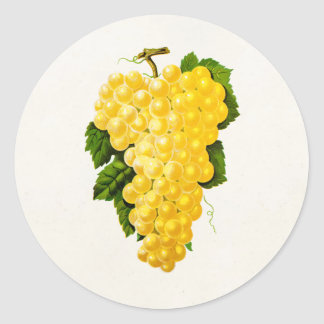 Vintage White Grapes Antique Grape Fruit Drawing Classic Round Sticker
