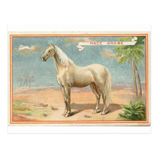 Vintage White Horse Graphic Postcard