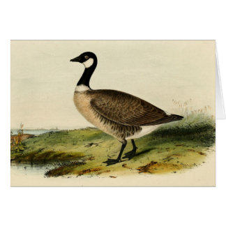 Vintage White Necked Goose Cards