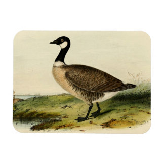 Vintage White Necked Goose Rectangle Magnet