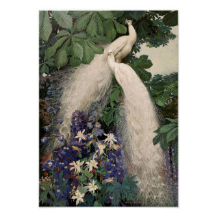 Vintage White Peacock Poster at Zazzle
