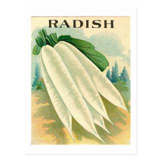 vintage white radish seed packet postcard