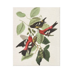 Premium Wrapped Canvas with Audubon's White-winged Crossbills design