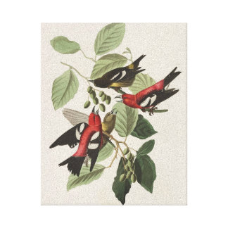 Vintage White-winged Crossbill Canvas Print