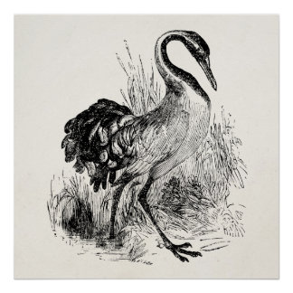 Vintage Whooping Crane Antique Template Poster