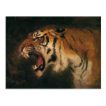Vintage Wild Animal, Bengal Tiger Roar Roaring Postcard