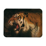Vintage Wild Animal, Bengal Tiger Roar Roaring Rectangle Magnets